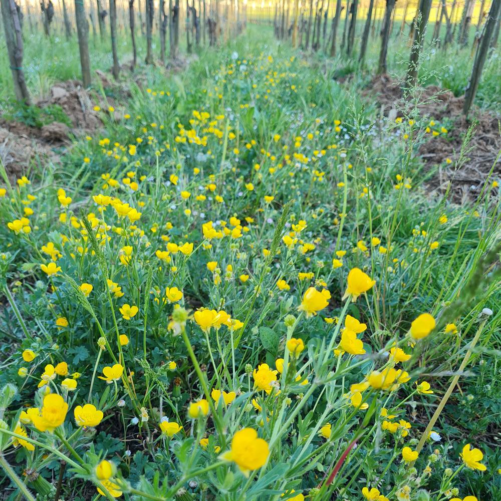 cantrina vino biologico garda