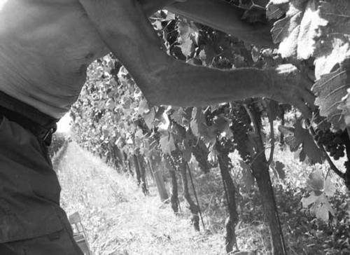 Harvest 2007