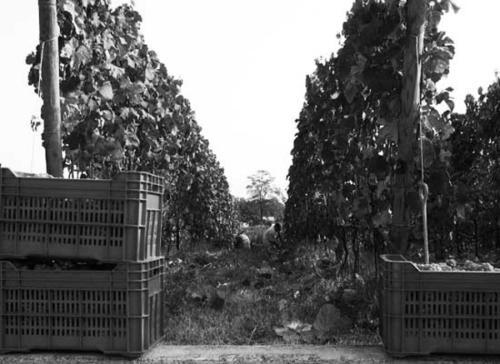 Harvest 2008