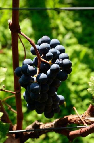 Harvest 2012